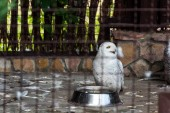 Photo selective focus of white owl near metallic bowl in cage