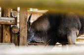 Photo selective focus of wild donkey standing near wooden fence in zoo