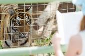 selektiver Fokus des Tigers im Käfig in der Nähe von Kind halten Buch im Zoo