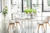 interiér kanceláře s stolovou, židlí, zelenými rostlinami a digitálními zařízeními