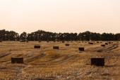 zelené stromy nedaleko pšenice s seno ve večerních hodinách