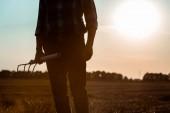 oříznutý pohled na člověka samostatně výdělečně zaměstnaný v držbě hrábě v pšeničném poli