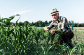 lavoratori autonomi agricoltore senior seduto vicino campo di mais
