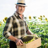 happy senior self-employed man in straw hat holding box near sunflowers