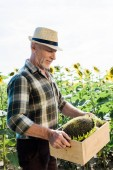 happy senior man in straw hat looking at box with sunflowers