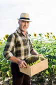 cheerful self-employed senior man in straw hat holding box with sunflowers