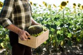 Fotografie cropped view of self-employed man holding box with sunflowers