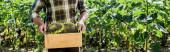 colpo panoramico di contadino autonomo scatola con girasoli