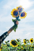 cropped view of farmer holding sunflowers against sky
