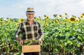 cheerful self-employed man holding box with sunflowers