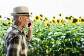 happy self-employed senior man talking on smartphone near sunflowers