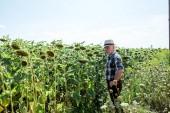 contadino in cappello di paglia in piedi vicino a girasoli in fiore