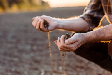 selective focus of self-employed farmer sowing seeds in evening