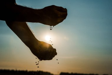 cropped view of self-employed farmer throwing seeds
