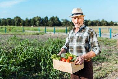 Happy farmer holding box with vegetables near corn field stock vector