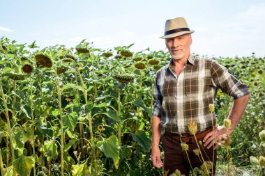 Happy farmer in straw hat standing with hand on hip near sunflowers stock vector