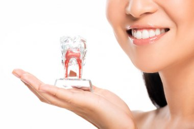partial view of happy woman holding tooth model isolated on white