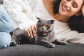 Photo selective focus of beautiful girl lying on sofa with scottish fold cat