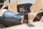 Fotografie oříznutý pohled na dívku pomocí smartphonu na pohovce se skotskou skládací kočkou