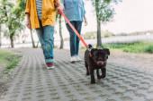 Szelektív fókusz a mopszli kutya séta mellett idős pár az ösvényen a parkban