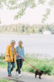 Mosolygó idősebb férfi néz felesége, miközben séta mopsz kutya pórázon a parkban