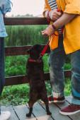 Vágott kilátás férfi kézen fogva mellett mopsz kutya pórázon közelében felesége a hídon a parkban