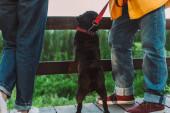 Vágott kilátás mopsz kutya pórázon áll mellett idős pár fa hídon a parkban