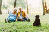 Szelektív fókusz a pug kutya ül közel pozitív idős pár fű a parkban