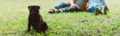 Vízszintes terménye mopszli kutya ül a füvön idős pár a háttérben a parkban
