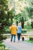 Visszapillantás idős pár mopsz kutya pórázon séta az úton a parkban