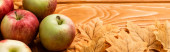 ripe apples and autumnal foliage on wooden background, panoramic shot