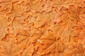 top view of golden autumnal foliage background