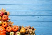 pohled shora na podzimní sklizeň a zeleň na modrém dřevěném pozadí