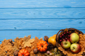 top view of autumnal harvest in basket and foliage on blue wooden background