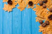 felső kilátás őszi lombozat dió és kúp kék fa háttér