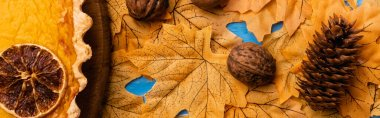 Top view of pumpkin pie on autumnal foliage with walnuts and cone, panoramic shot stock vector