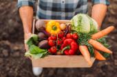 vyvýšený pohled na farmáře držícího dřevěnou krabici s čerstvou, zralou zeleninou
