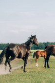 brown horses with colt grazing on grassland against sky