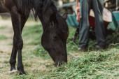 barna ló eszik széna a farmon