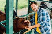 vysoký úhel pohledu na farmáře v kostkované košili dotýkající se hnědé krávy při pohledu do kamery
