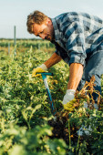 Photo selective focus of farmer in checkered shirt digging in field