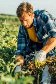 selektivní zaměření farmáře v rukavicích a kostkované košili pracující v terénu