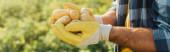 částečný pohled na zemědělce držícího čerstvé brambory v dlaních, záhlaví stránky