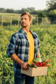 farmář v kostkované košili držení krabice s čerstvou zeleninou, zatímco stojí v poli