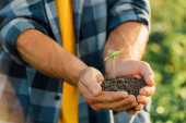 Photo partial view of farmer in checkered shirt holding green sprout in cupped hands
