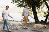 otec a syn drží vodítka při chůzi se zlatými retrívry v blízkosti jezera