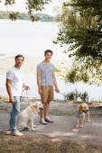 Fotografie Vater und Sohn mit Golden Retrievern am See an der Leine