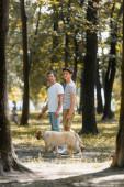 selektivní zaměření otce a dospívajícího syna při pohledu na kameru při stání v parku se zlatým retrívrem