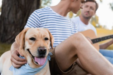 selective focus of golden retriever near teenager boy and man with acoustic guitar in park