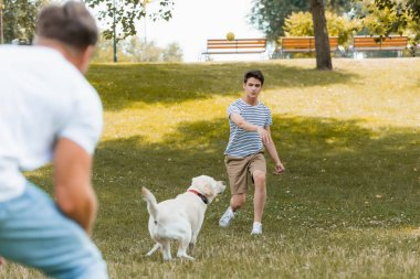 Selective focus of teenager son and father playing with dog outside stock vector